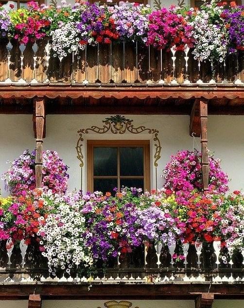 Frentes con flores colgantes