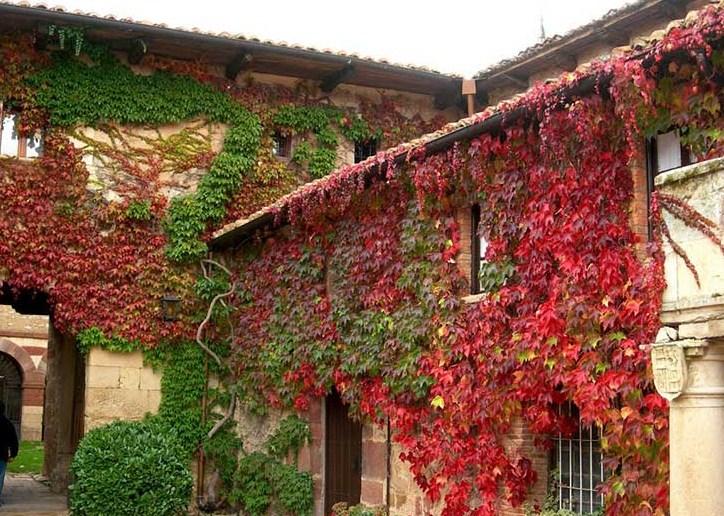 Fachadas de casas con enredaderas en sus muros