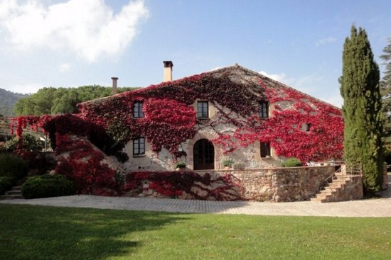 House facades with vines