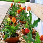 10 Ideas para decorar patios con piedras naturales